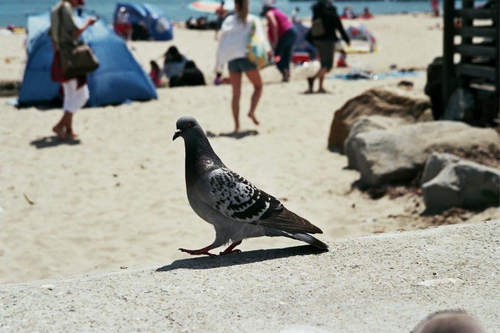 #randomallaroundtheworldbird