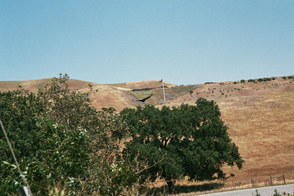 #starspangledeaglebannertrees