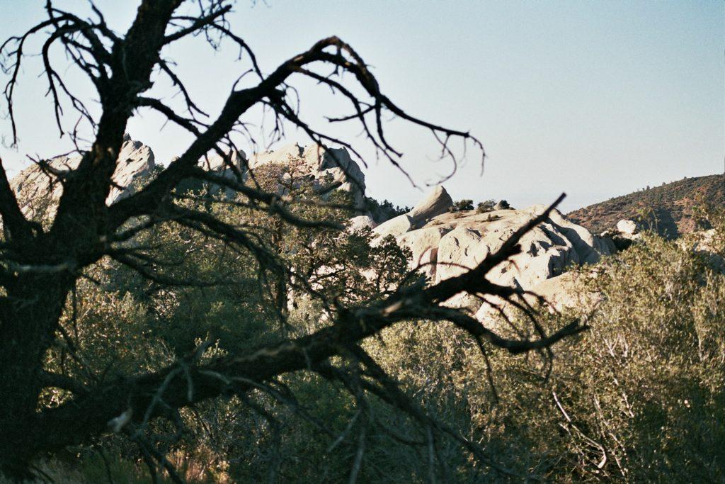#treesandrocks