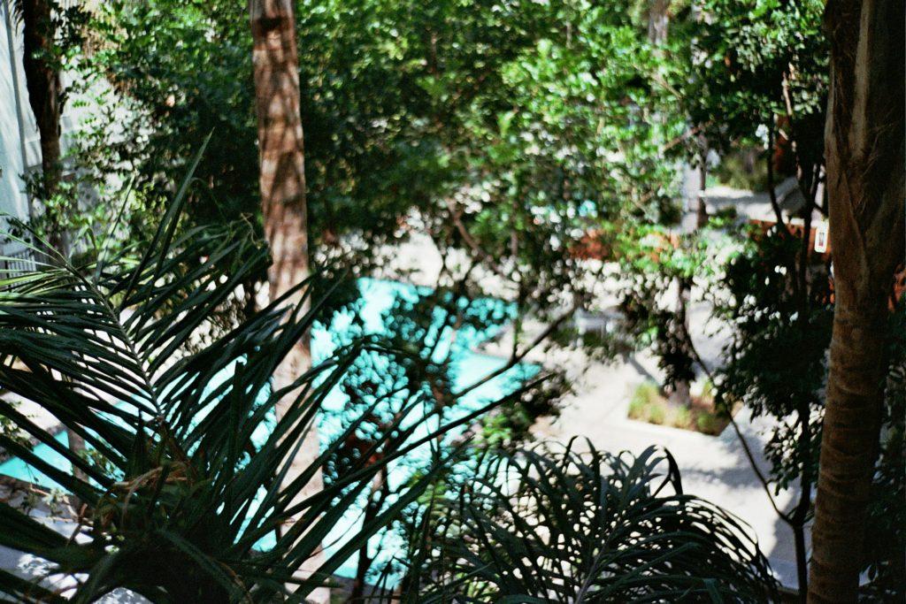 #blurrybackyard