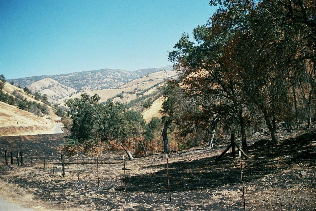 #treesandfire